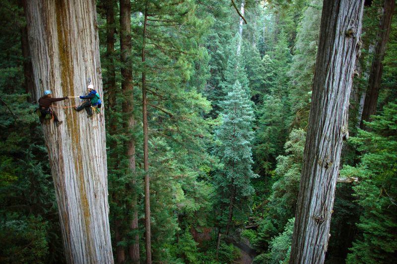 gỗ tự nhiên là gì