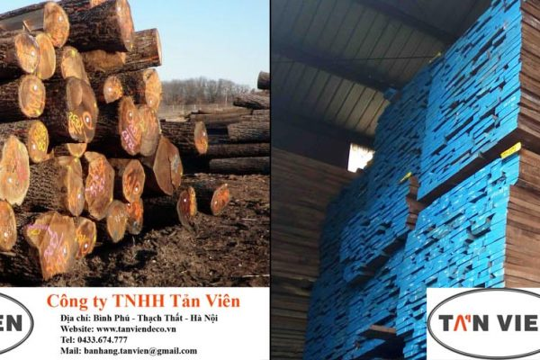 gỗ óc chó Walnut