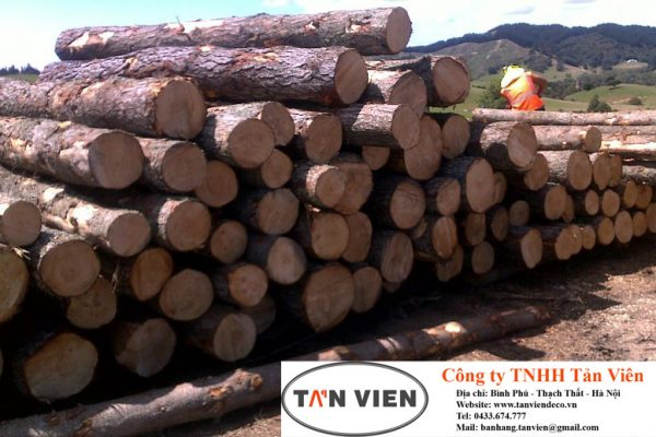 gỗ thông nguyên liệu nhập khẩu tại Hà Nội