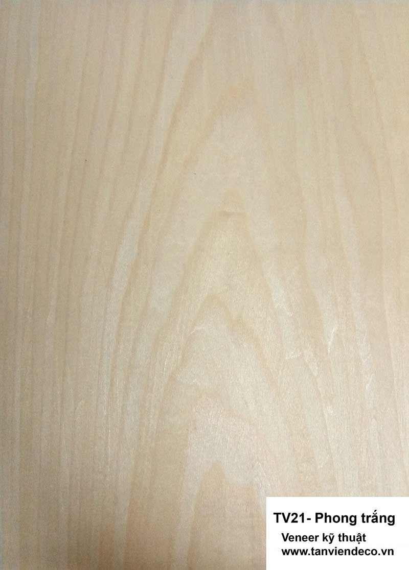 Veneer kỹ thuật - TV21- Phong trắng