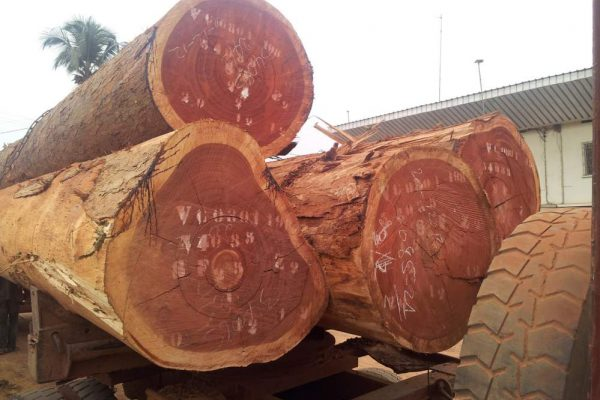 Sapele-Wood-Logs