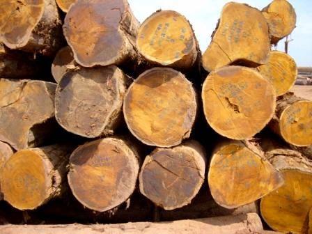 gỗ mít châu phi tại Hà Nội