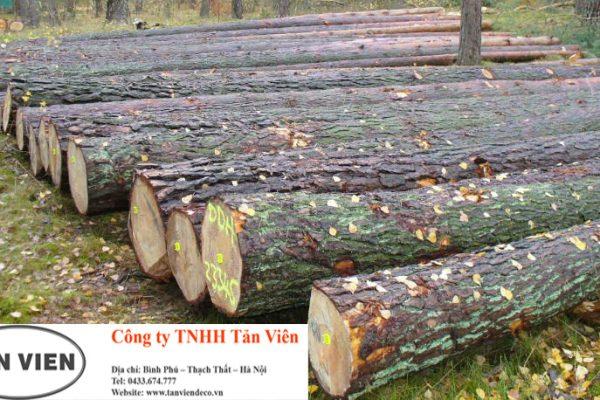 Mua gỗ thông nhập khảu tại Hà Nội