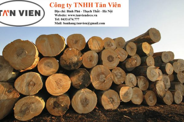 gỗ beech tròn tại Hà Nội
