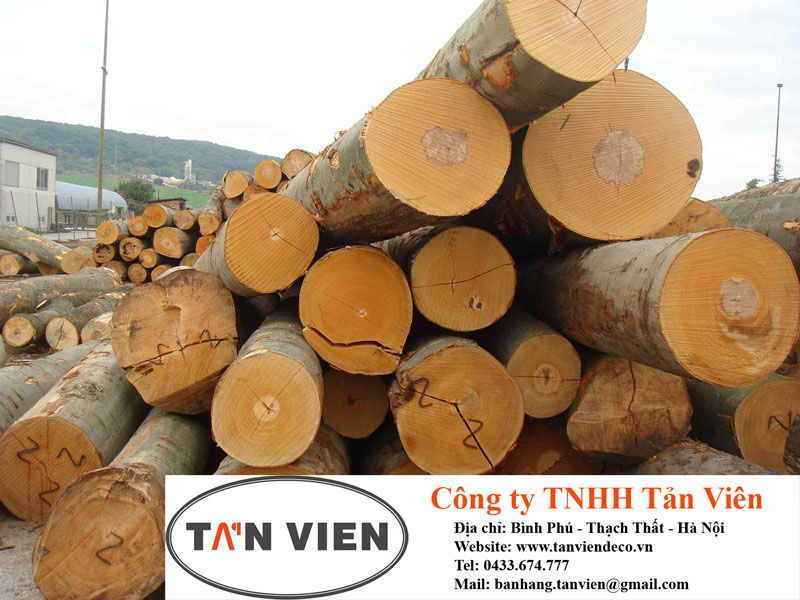 gỗ dẻ gai tròn tại Hà Nội