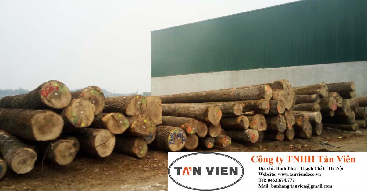 mua bán gỗ tần bì tròn tại Hà Nội