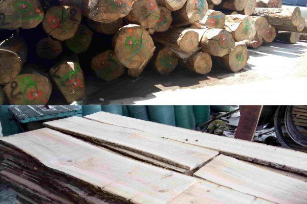 gỗ tần bì nguyên liệu tại hà nội