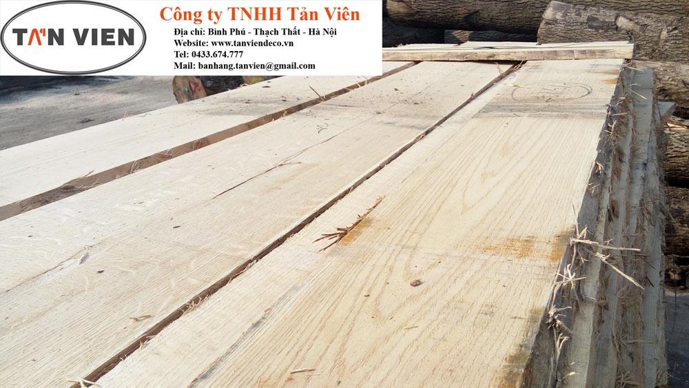 gỗ sồi có bị mối mọt không