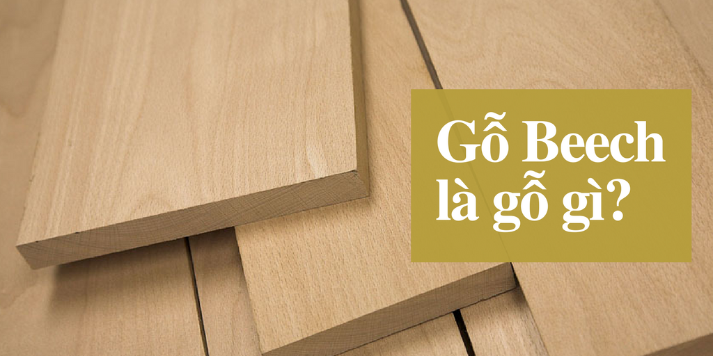 gỗ beech là gỗ gì? giá gỗ beech bao nhiêu?