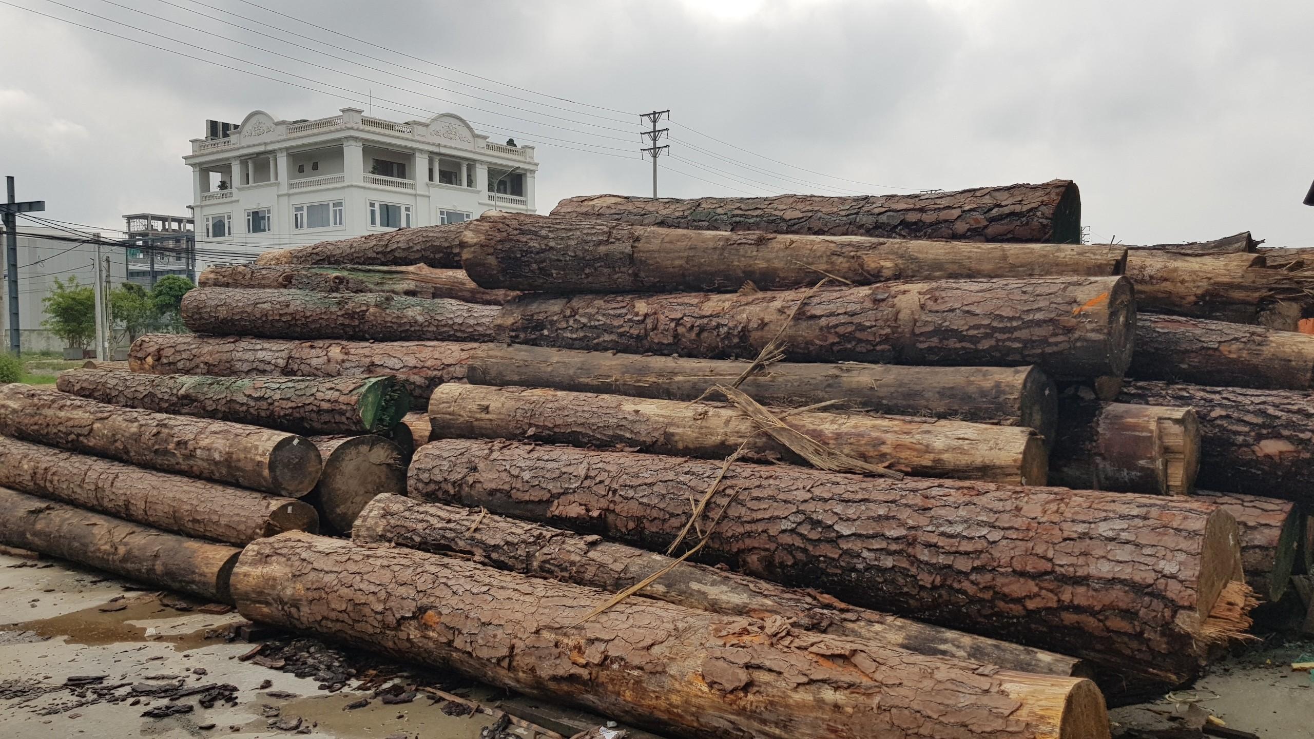gỗ thông tròn