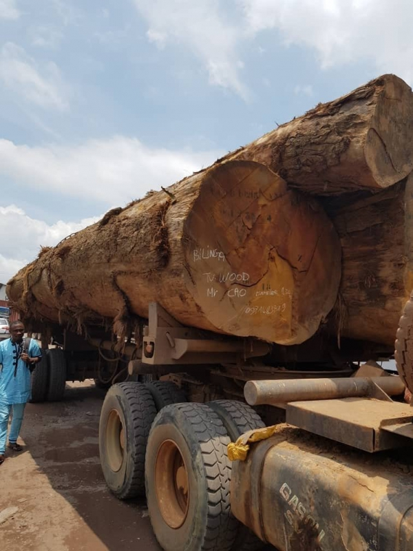 gỗ mít nam phi Bilinga